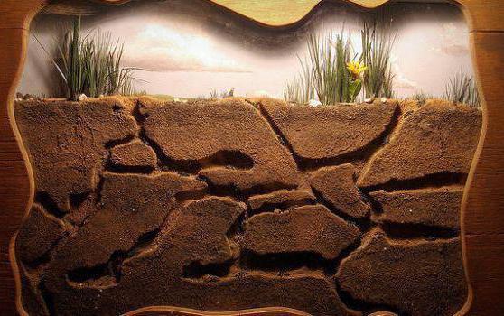 гипсовая муравьиная ферма