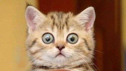 интересные факты о кошках для детей