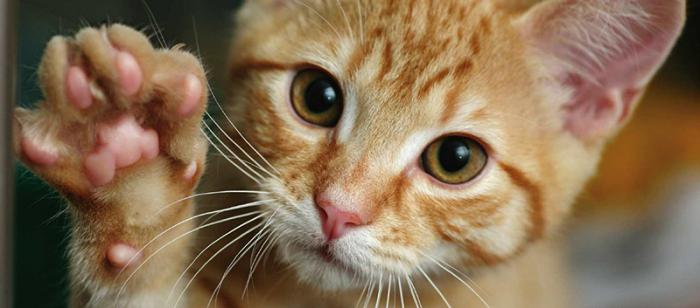 кошки интересные факты для детей