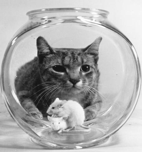 интересные факты про кошек