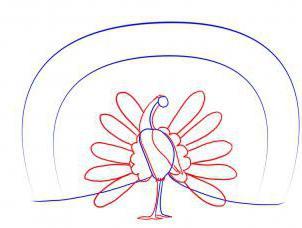 как нарисовать перо павлина