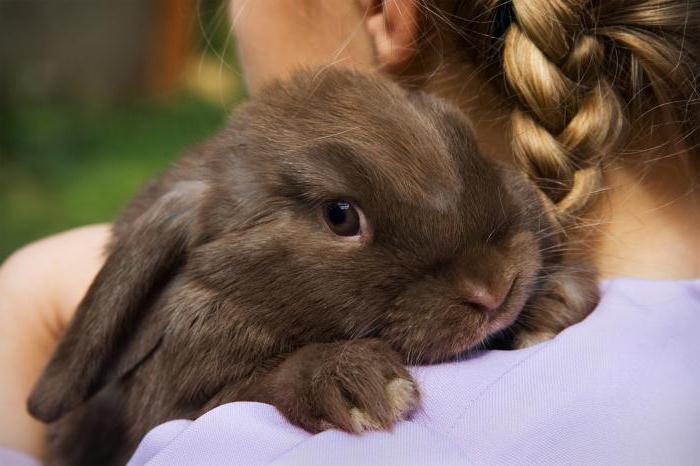 Декоративные кролики 31