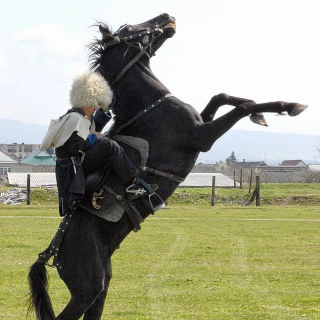 кабардинская черкесская порода лошадей