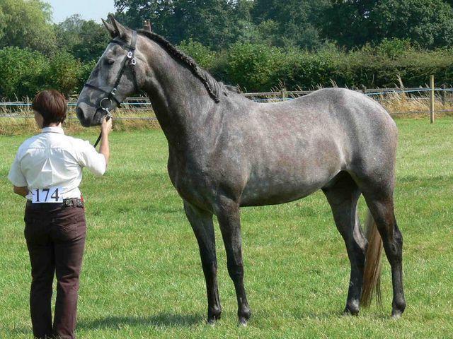 кабардинская порода лошадей описание экстерьера
