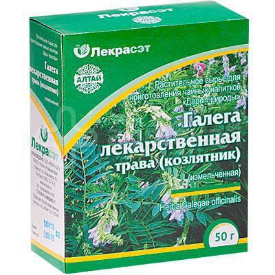 растение галега лекарственная