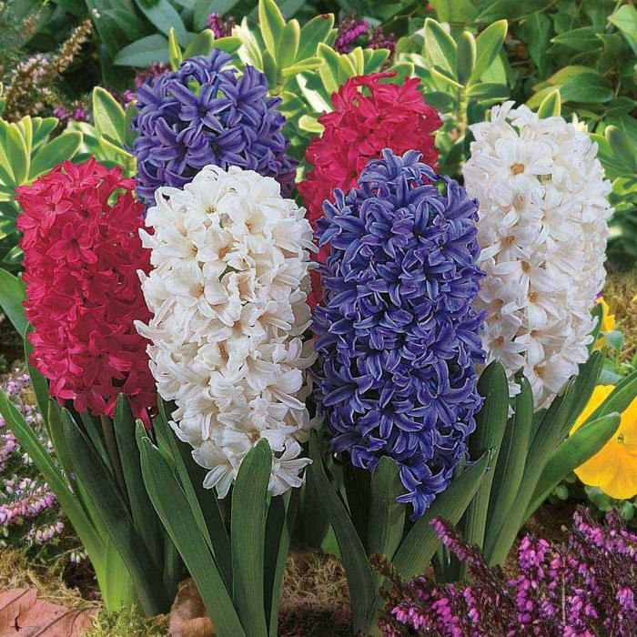 красивейшие растения мира