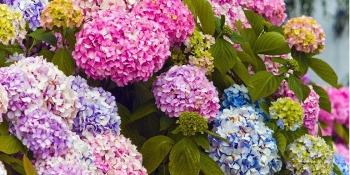 красивые цветущие растения