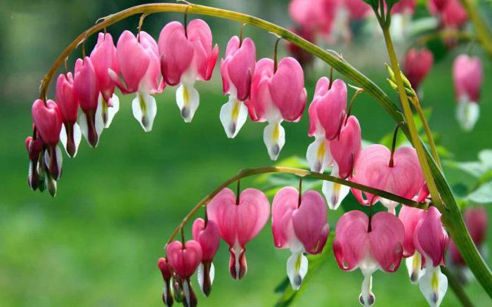 красивые виды растений