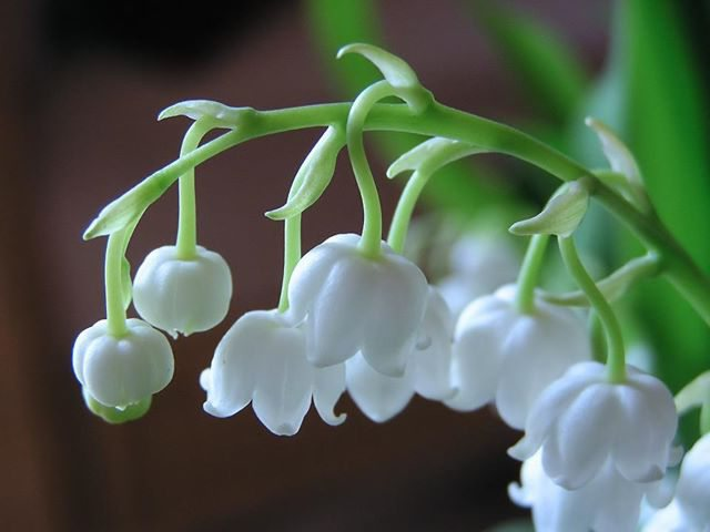 красивые зеленые растения
