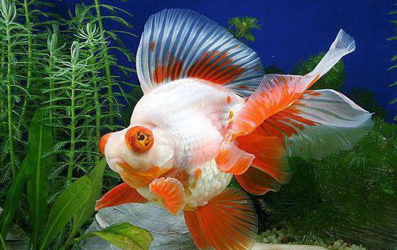 самые красивые аквариумные рыбки фото и названия