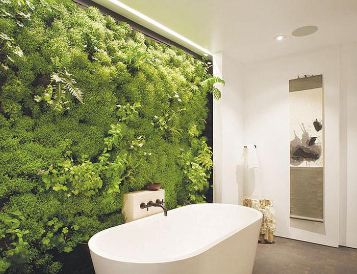 тенелюбивые растения для дома названия
