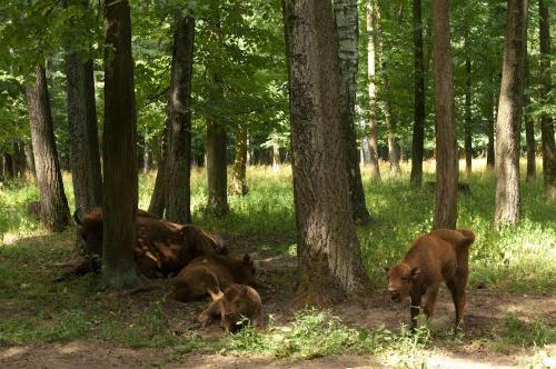Приокско-Террасный заповедник — Википедия
