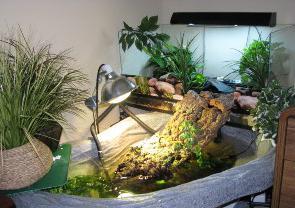 Как сделать террариум для красноухих черепах в домашних условиях