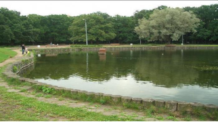 парк дубки москва
