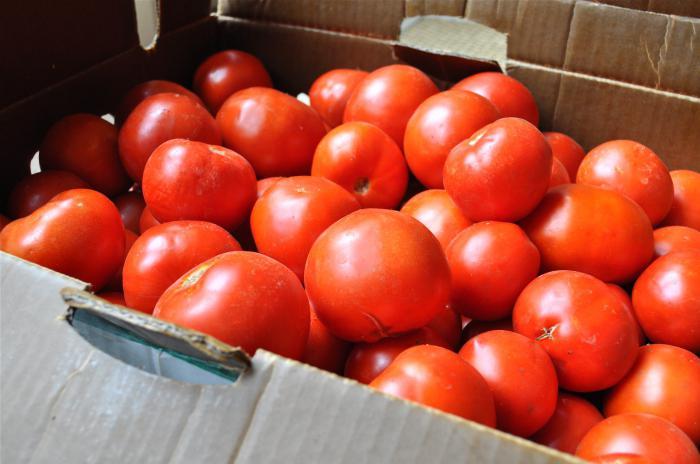 бочковые помидоры в ведре