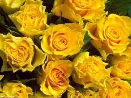 Что означает цвет даримых цветов