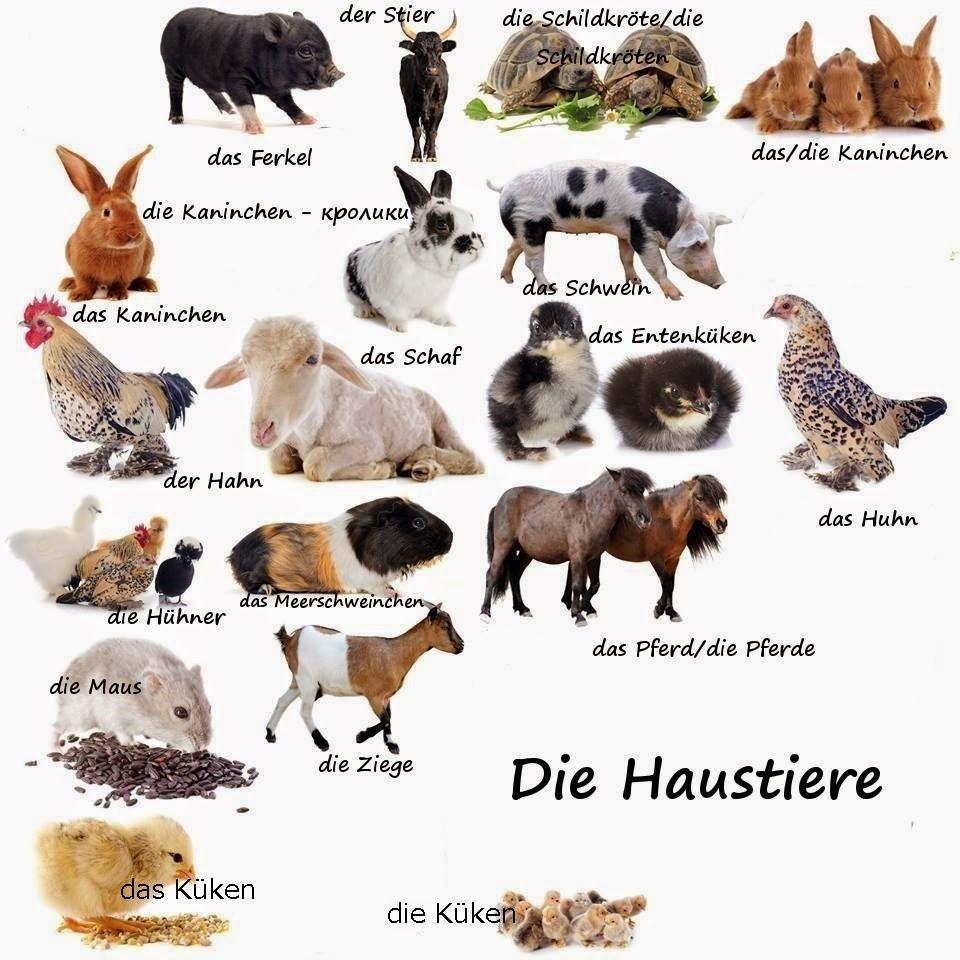 можно постер про животных на немецком что