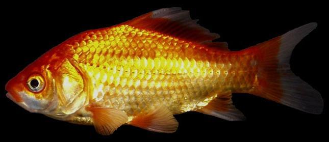 где ловится рыба в кирове