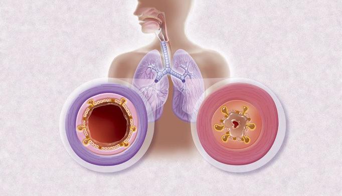 процесс дыхания организмов