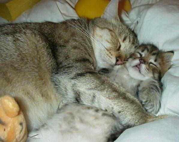 Почему кошки днем спят