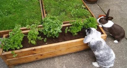 Вольер для кролика своими руками