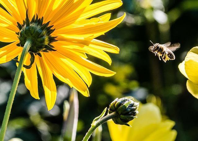 полезное насекомое