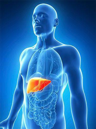 Гепатит в носитель что это такое