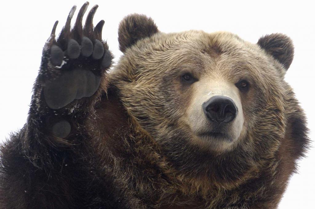 Занималась сексом на шкуре медведя
