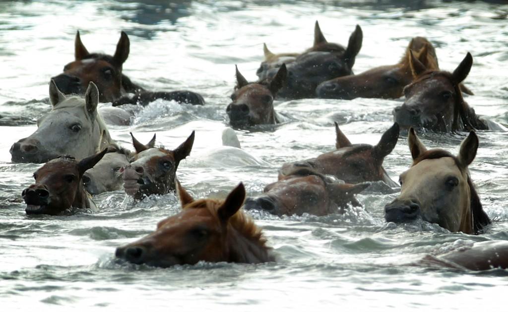 лошади умеют плавать