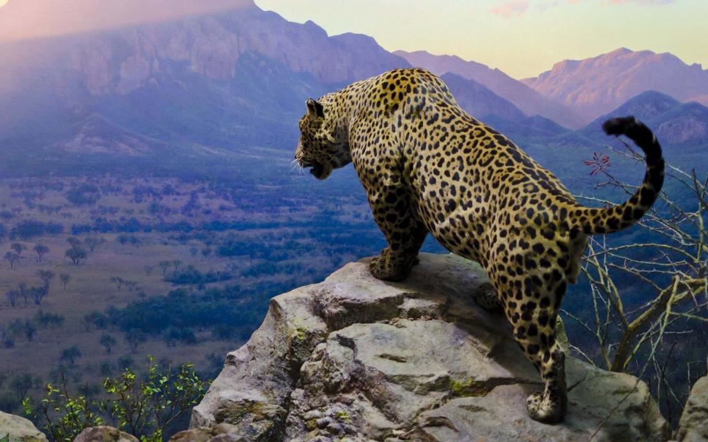 ягуар в засаде