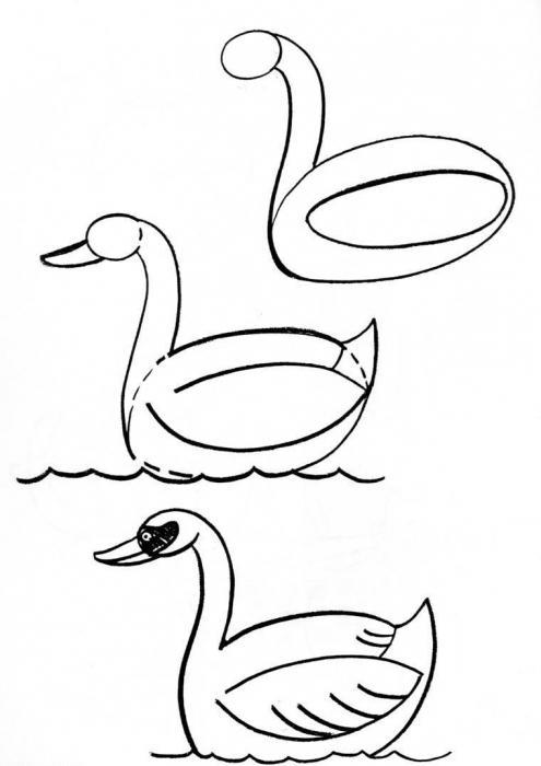 Как рисовать лебедя поэтапно