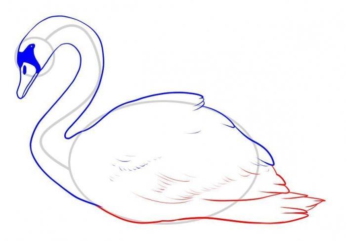 Как рисовать лебедя карандашом
