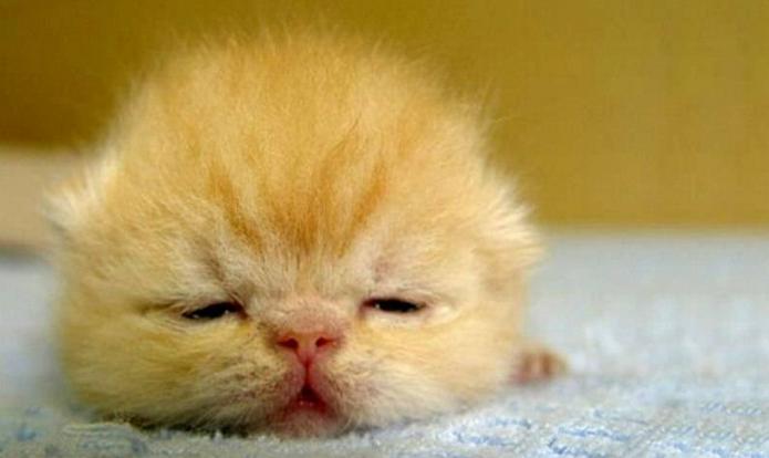Через сколько дней котята открывают