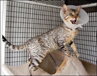 лекарство от лишая для кошек