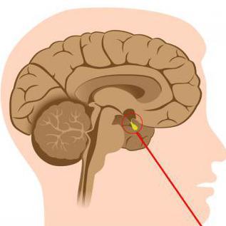 гормоны гипоталамуса либерины и статины биохимия презентация