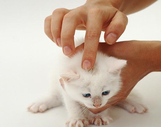 мазь от лишая у кошек