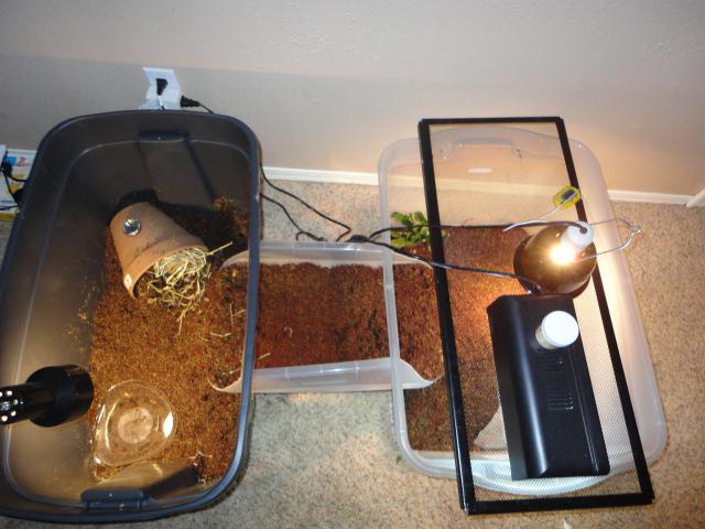 Ультрафиолетовая лампа для черепахи своими руками