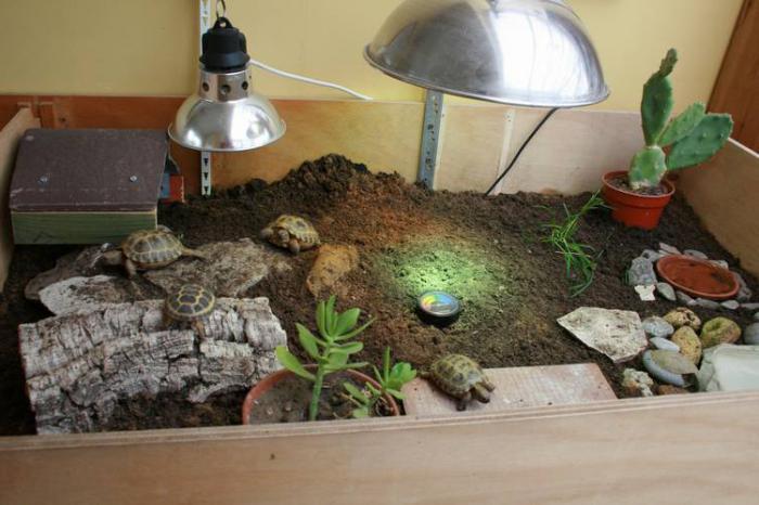 Ультрафиолетовые лампы для черепах фото