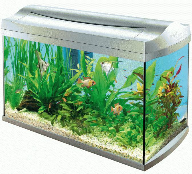 Видовая структура аквариума