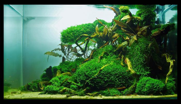 Дизайн аквариума своими руками фото 314