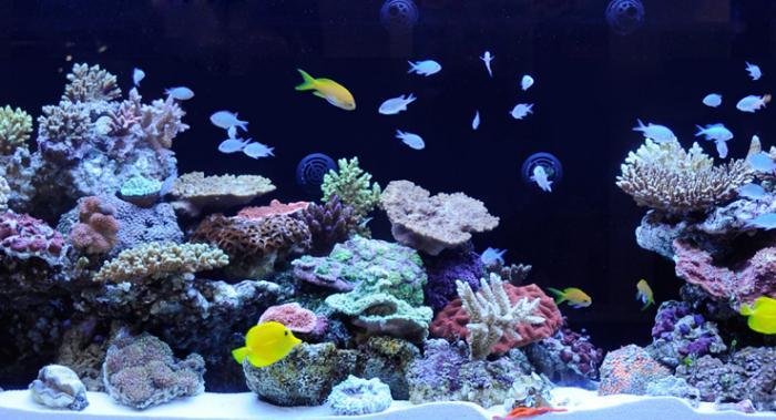 Дизайн аквариума своими руками 200 литров