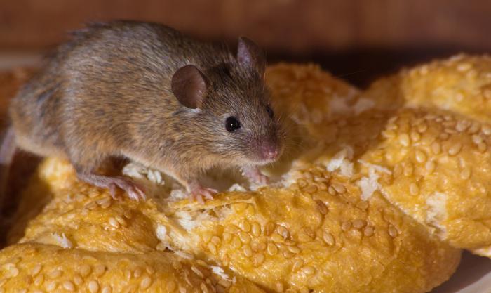 ультразвуковой отпугиватель мышей кто пользовался