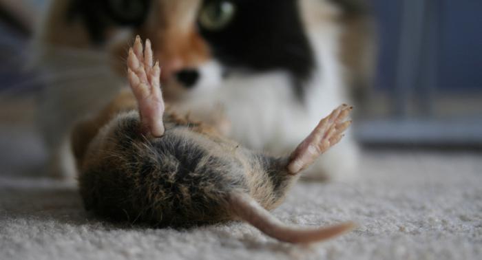 как избавиться от крыс в частном доме если есть собаки