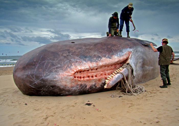 Как занимаются сексом киты