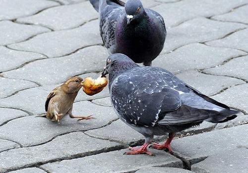 какие птицы живут в городе