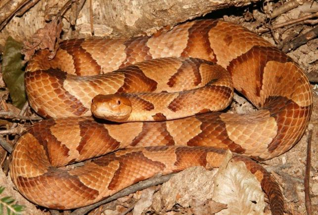 гравер гравировальный фото змей в тамбовской области фото информацией мебели