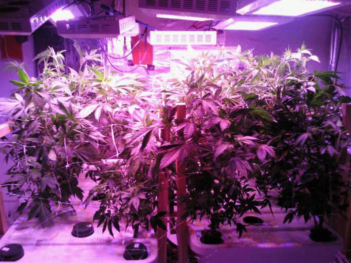спектр светодиодов для растений