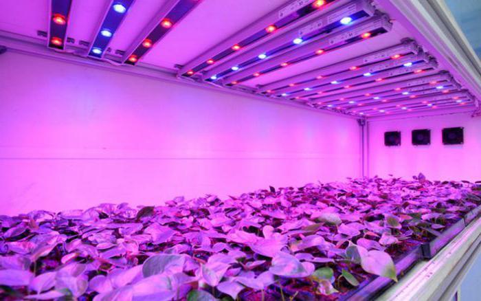 светодиоды для роста растений