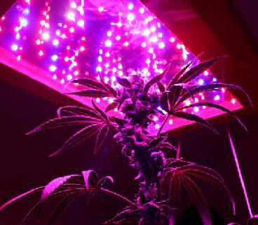 красные и синие светодиоды для растений