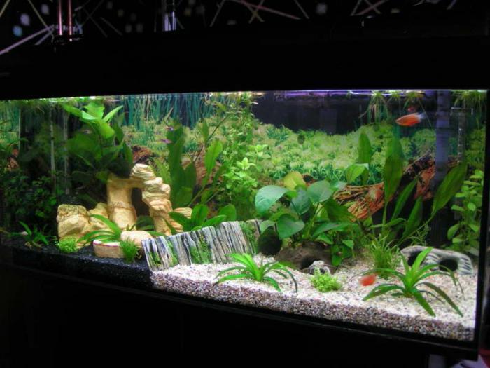варианты оформления аквариума